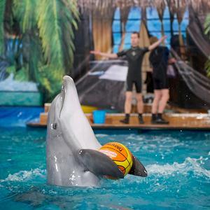 Дельфинарии, океанариумы Щелково