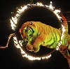 Цирки в Щелково