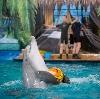 Дельфинарии, океанариумы в Щелково