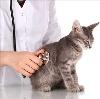 Ветеринарные клиники в Щелково
